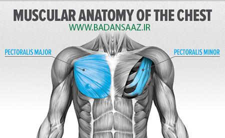 تقویت عضلات سینه در بدنسازی